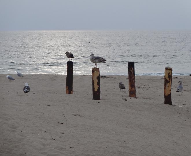 beach-birds-enjoy-golden-hour-hermosa
