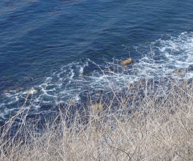 palos-verdes-through-the-brush
