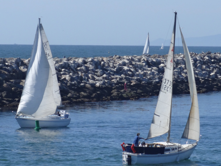 sailboats-redondo-harbor
