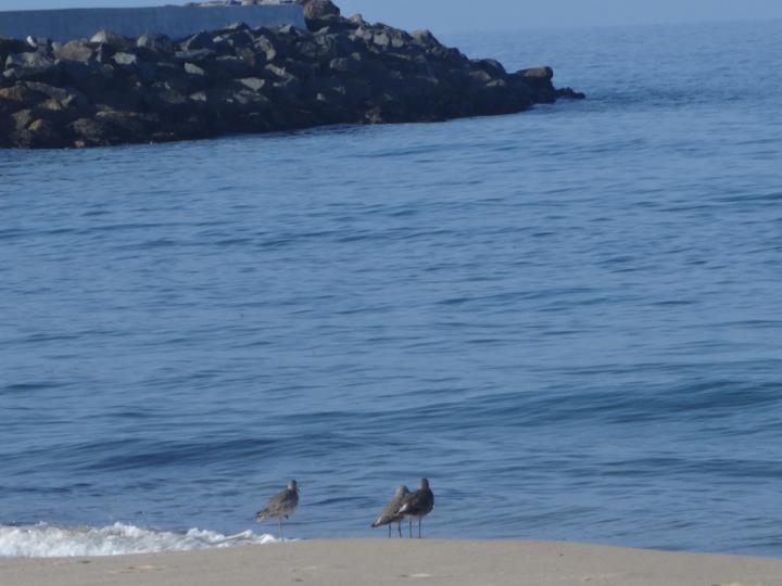 breakwater-birds-redondo