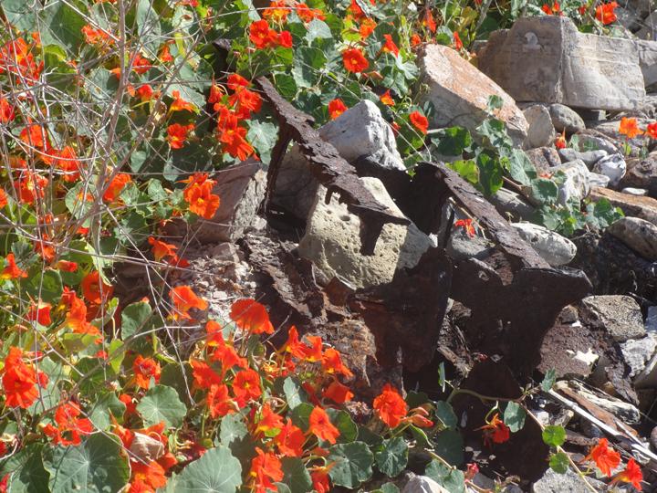flowers-in-wreckage-2013