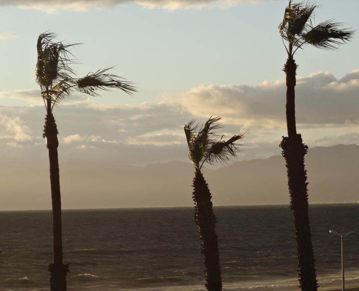 windy-palm-trees-dockweiler