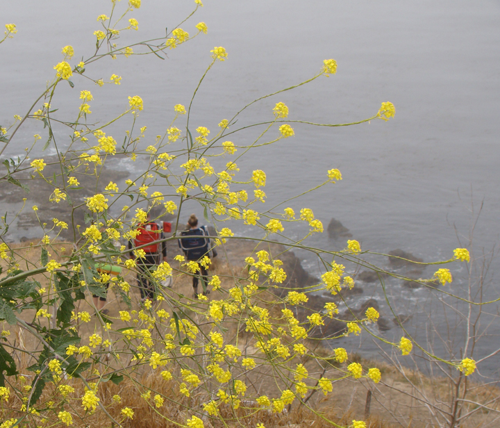 foggy-hikers-pv-flowers