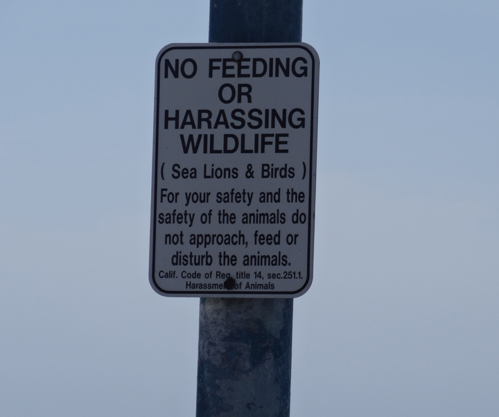 no-harassing-wildlife
