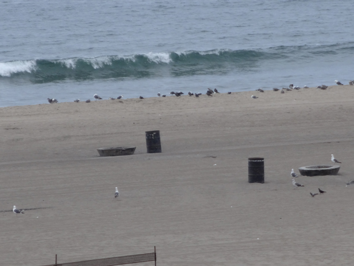 dockweiler-birds-cloudy-morning