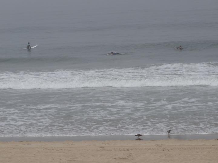 foggy-surf-day