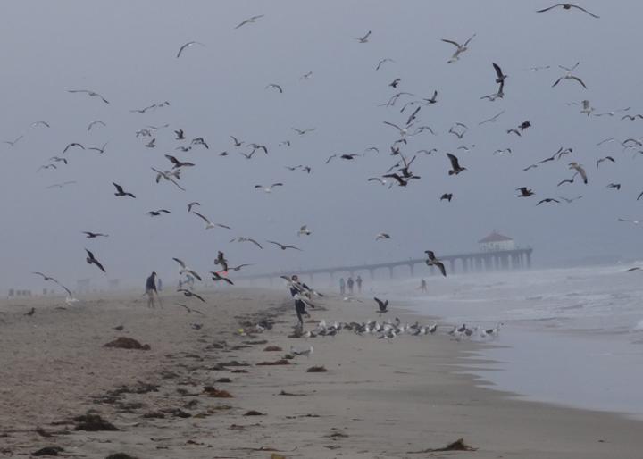 el-porto-birds-part-2
