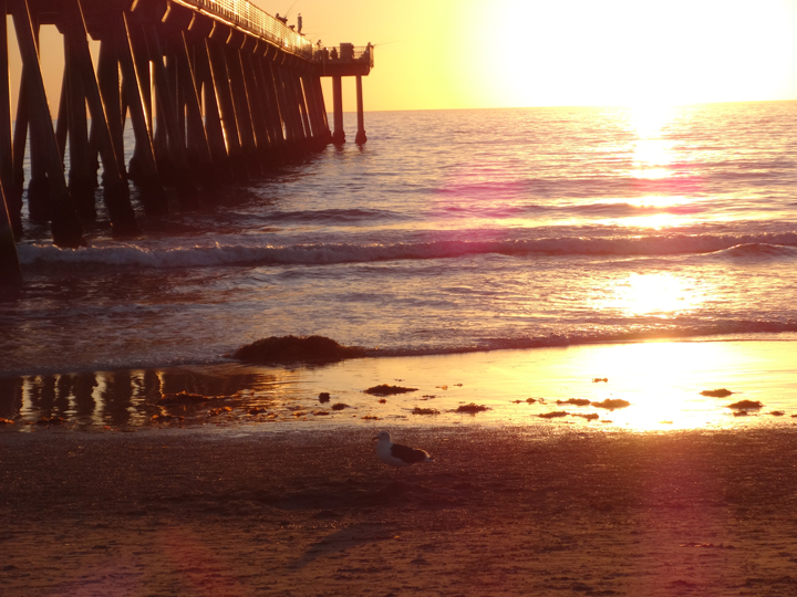 golden-bird-sunset-hermosa-pier