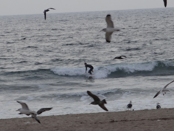 surfing-for-birds-el-porto