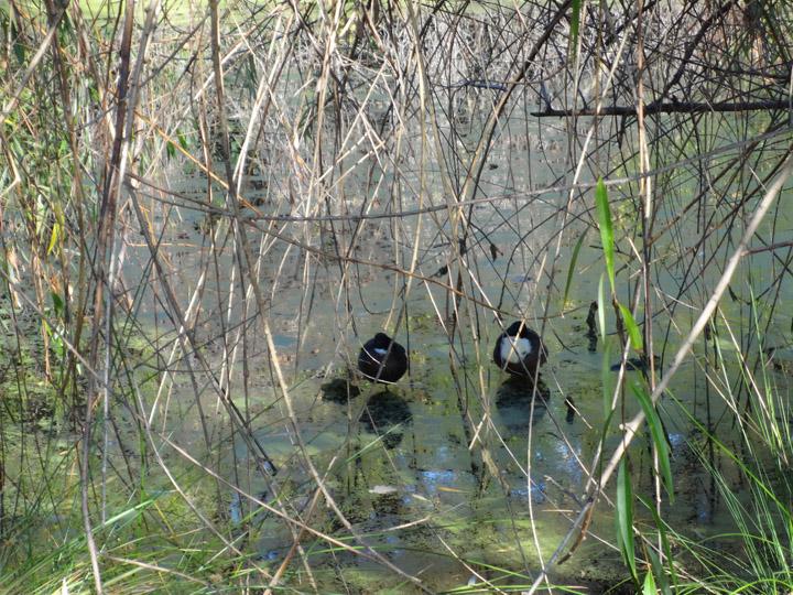 hiding-plain-sight-stockton-birds