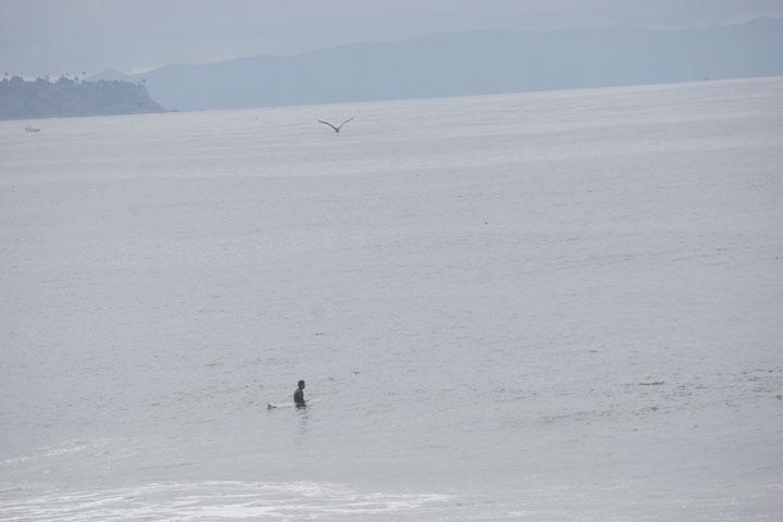 calm-serene-bay-surfer-bird