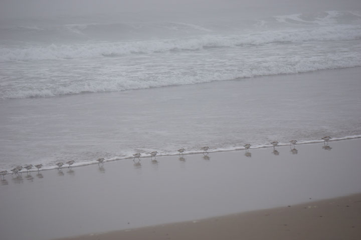 little-birds-lined-up-row-hermosa