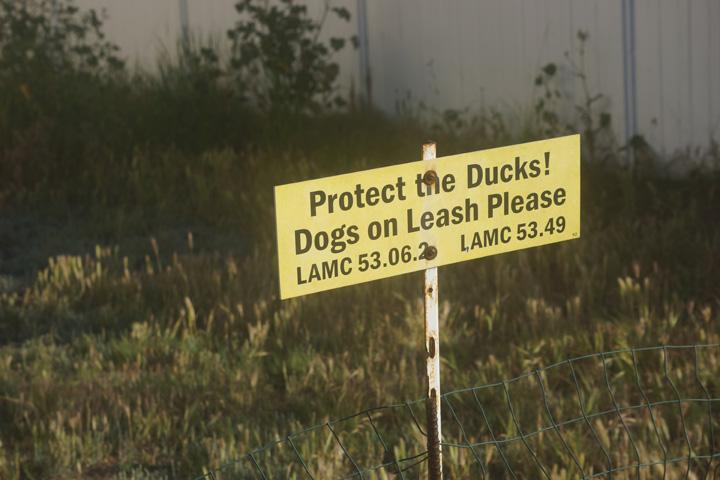 protect-the-ducks-venice