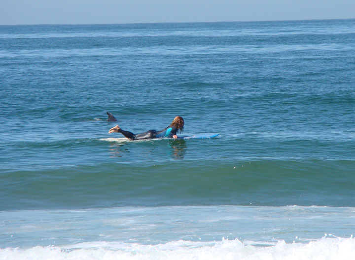 surfer-dolphin-communing-nature-hermosa