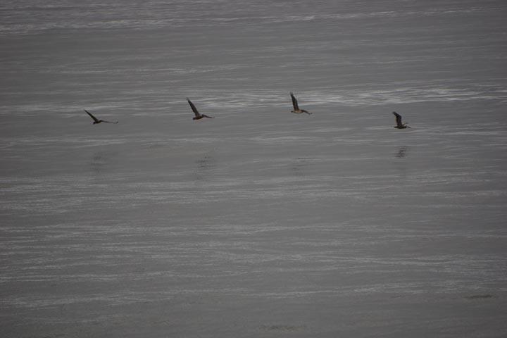 shadows-water-birds-flight-hermosa