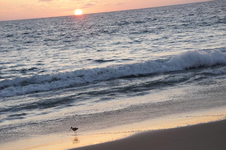 bird-meal-sunset-herondo