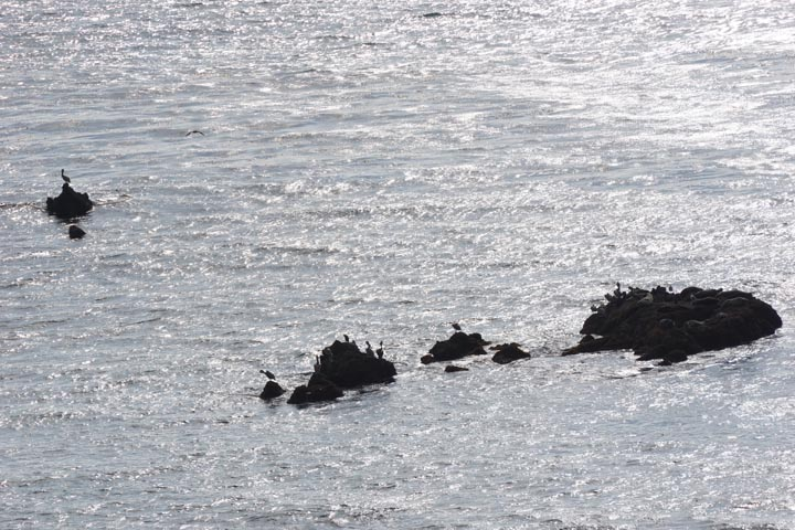 malaga-cove-birds-rocks