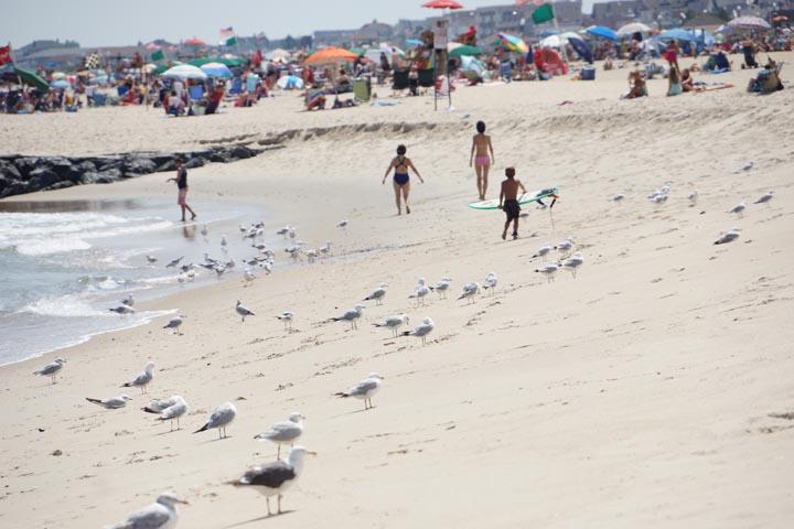 ocean-grove-little-surfer-birds