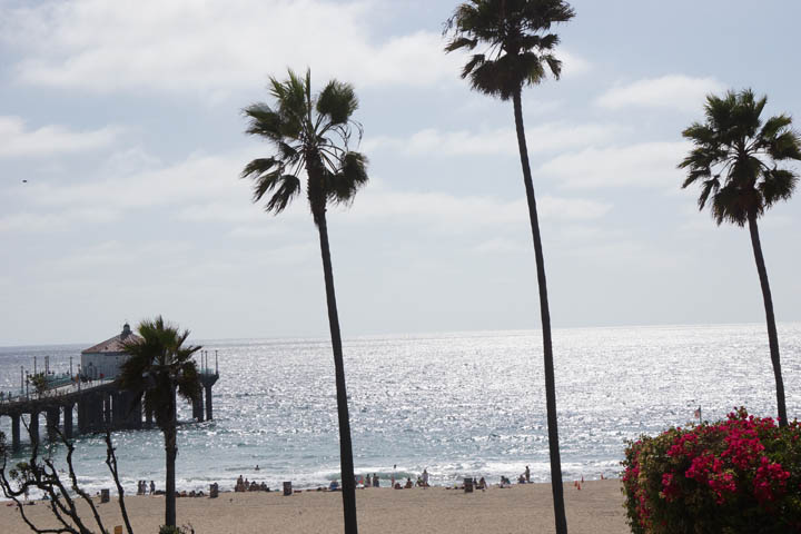 palms-and-the-pier