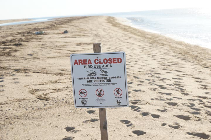 provincetown-area-closed-bird-use