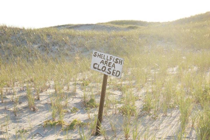 provincetown-shellfish-area-closed