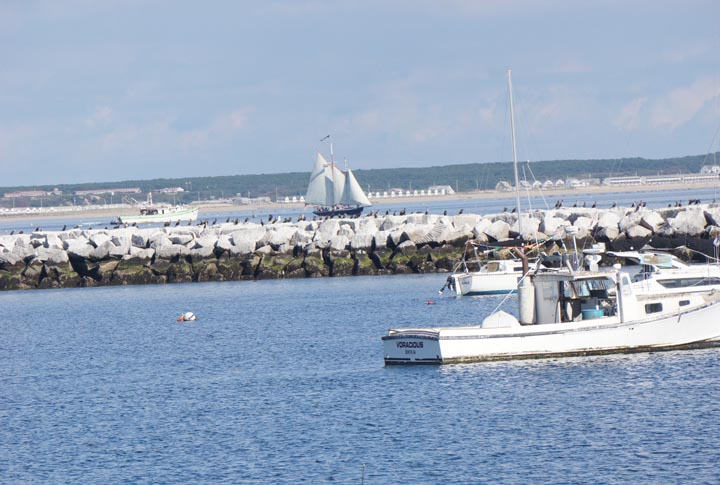 provincetown-ships-harbor