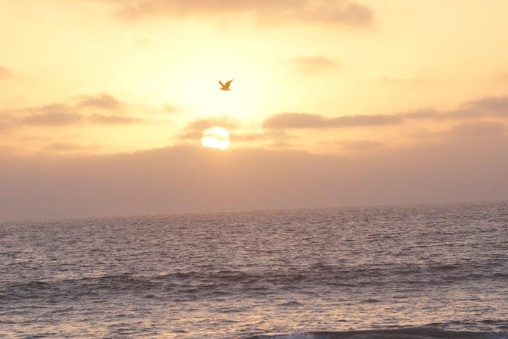 hermosa-sunset-bird