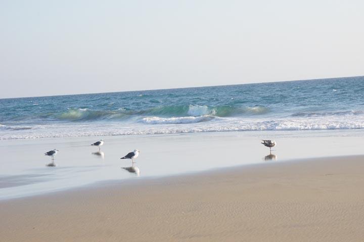 huntington-beach-birds-october
