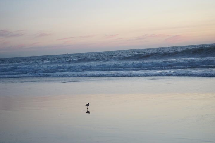 solitary-bird-sunset-hermosa