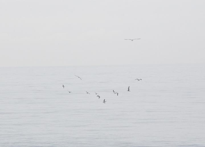 birds-circling-ocean-near-pier-hermosa