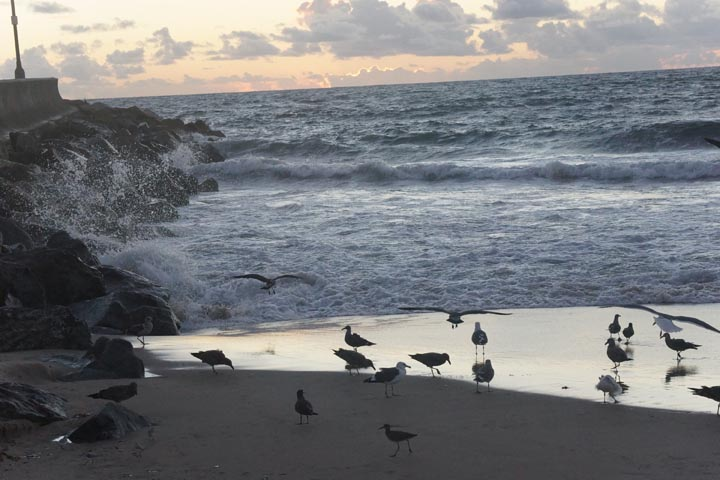 birds-storm-runoff-breakwater-redondo