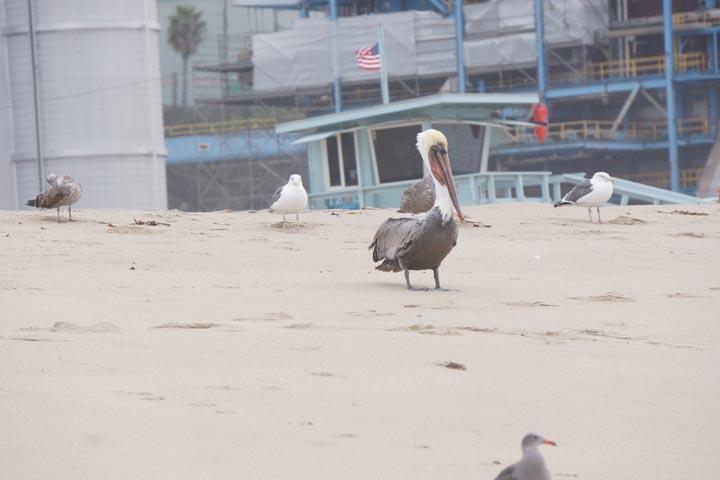 dockweiler-pelican-lifeguard-stand