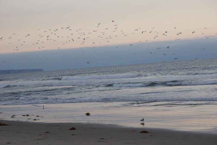 flock-seagulls-el-porto