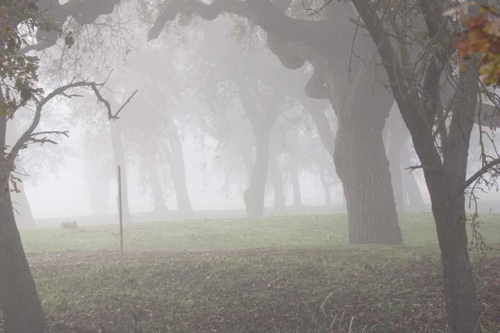 morning-valley-fog