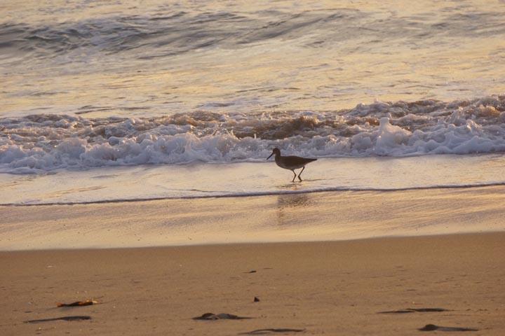 sandpiper-sunset-manhattan-beach