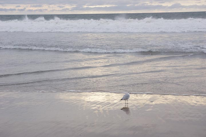 gull-dockweiler-sun-reflection