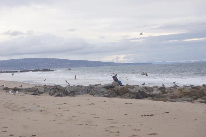 gulls-gather-round-beachcomber-dockweiler
