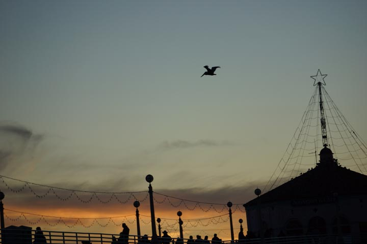 pelican-over-manhattan-pier