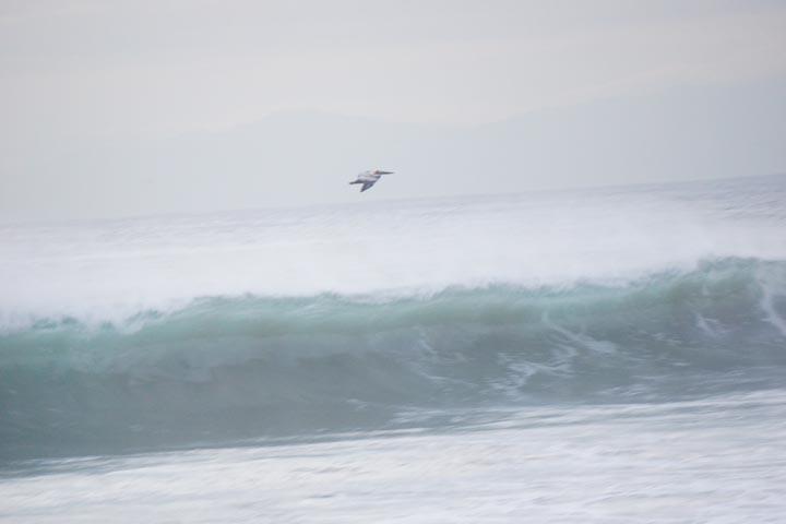 pelli-herondo-wave