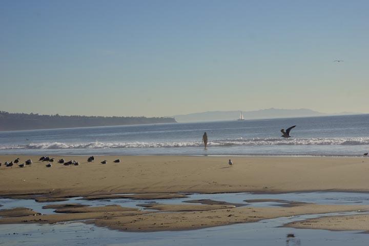 low-tide-january-hermosa-girl-birds