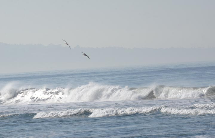 pelicans-over-hermosa-waves-north-pier