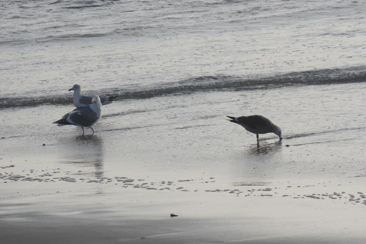 seagulls-waters-edge-el-porto