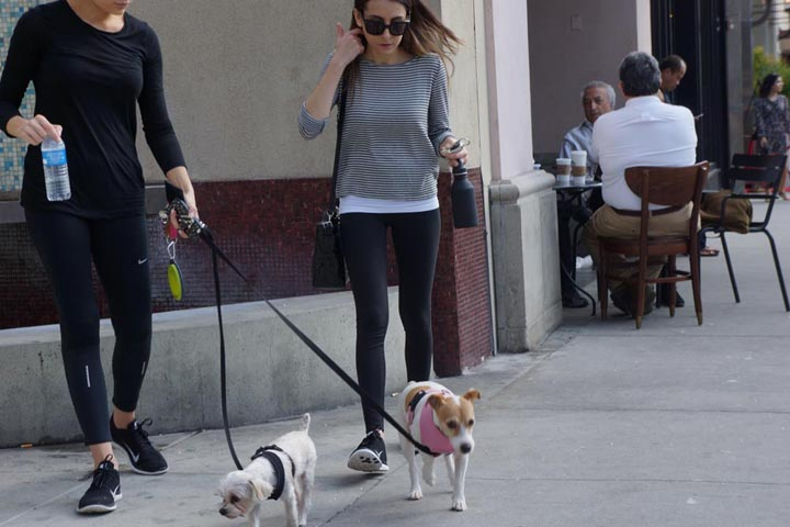 bevhills-women-little-dogs
