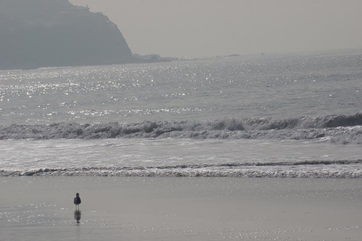 gull-rat-beach-sunny-feb-afternoon