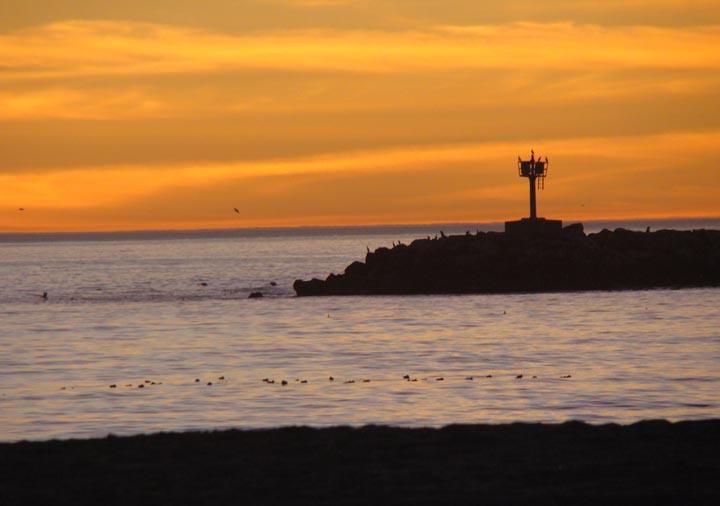 playa-jetty-birds-sunset