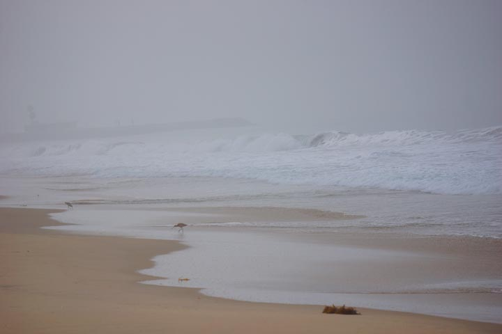sandpiper-foggy-morning-hermosa