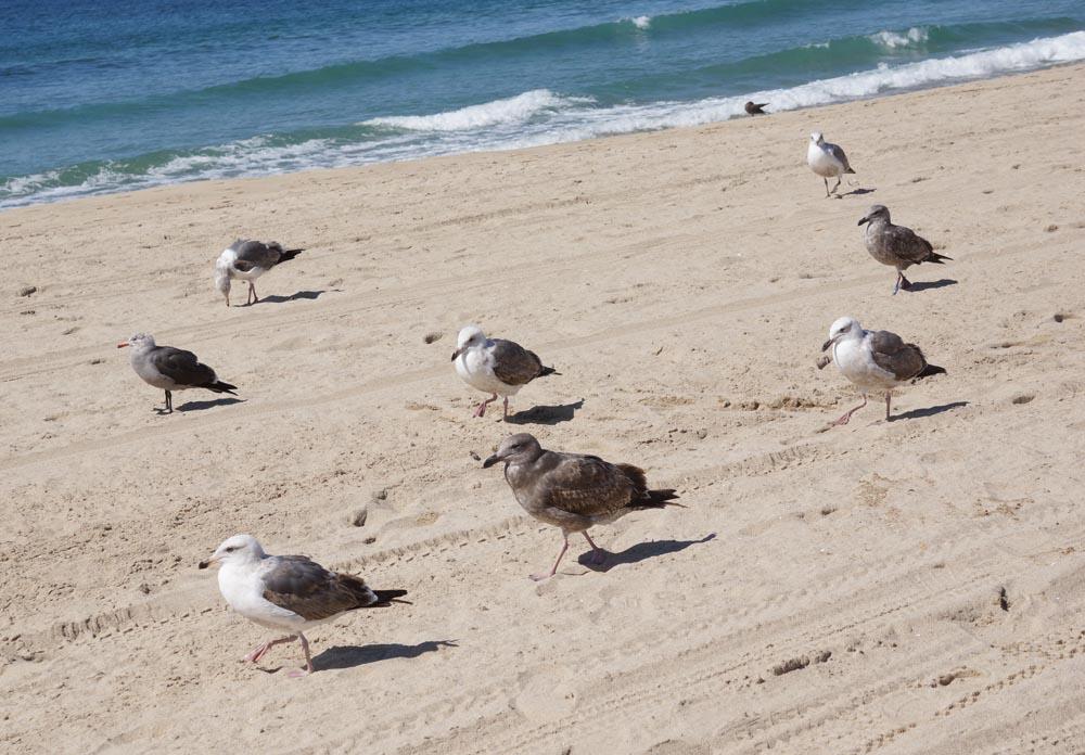 gull-army-advancing