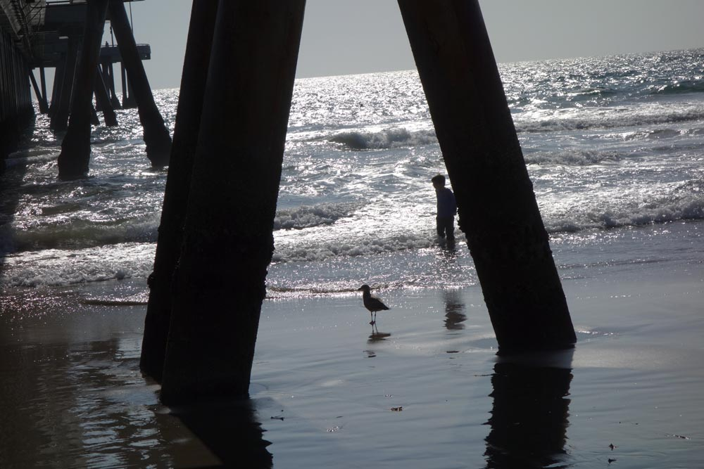kid-and-gull-venice-pier