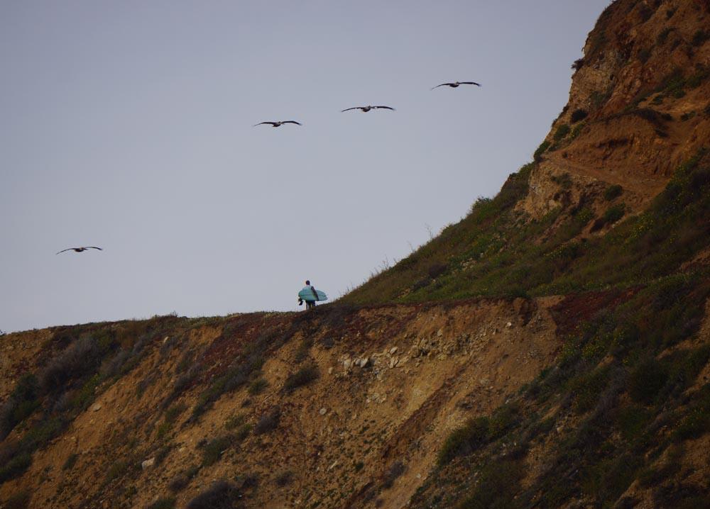 pelicans-departing-surfer-malaga