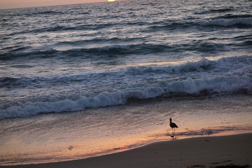 sandpiper-herondo-sunset